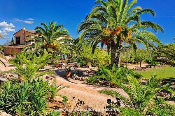 Finca con casa de huéspedes rodeada de un jardín de palmeras