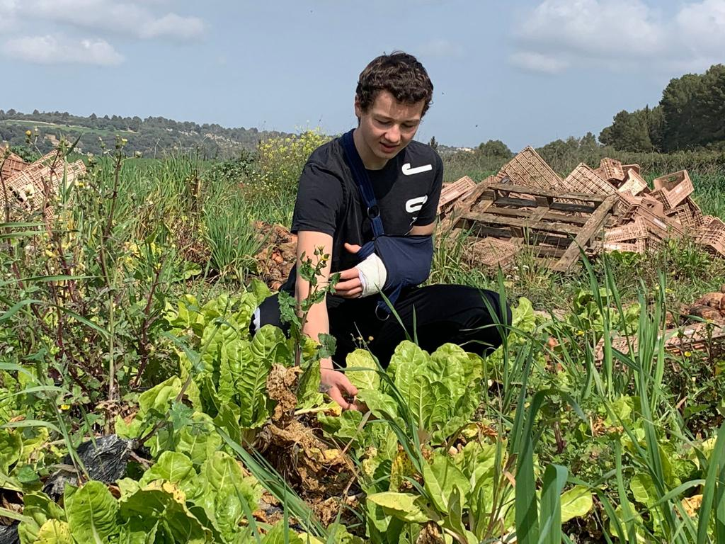 Los hijos de Nicky también están ayudando activamente. Malik cosechando.