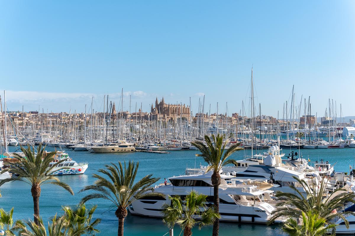 Ciudad de Palma con vistas al puerto deportivo y la catedral.