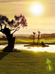 Olivos, palmeras y vides rodean el campo. (Foto: Son Gual)