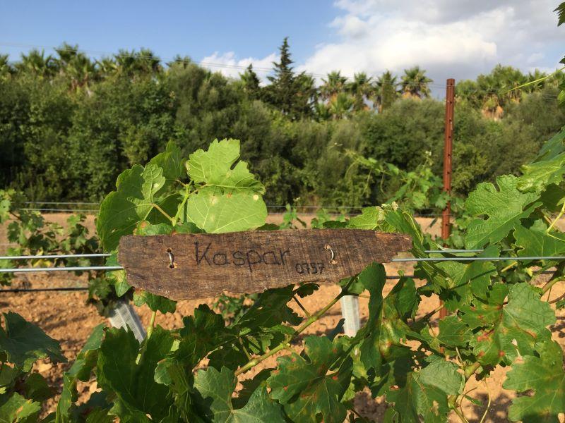 Crowdfunding para la vid. La pareja Grahe financió sus viñedos con patrocinios. Imagen: Alexandra y Sören Grahe