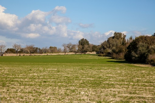 Terreno llano