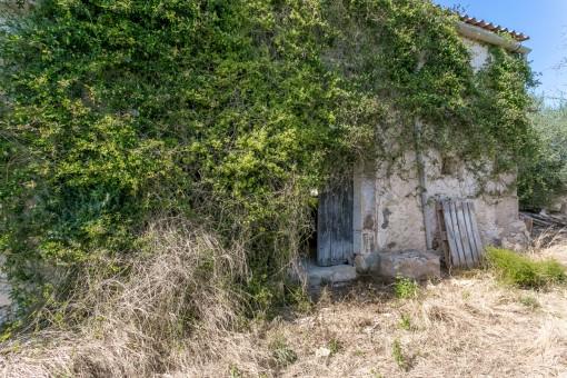 Las ruinas están cubiertas de hiedra