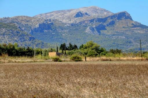 Solar en Alcudia