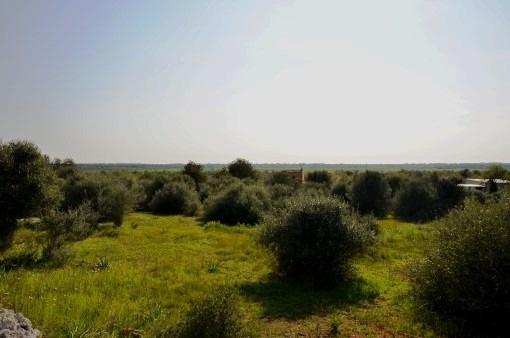 Terreno edificable rural con proyecto a poca distancia a pie de Santanyí