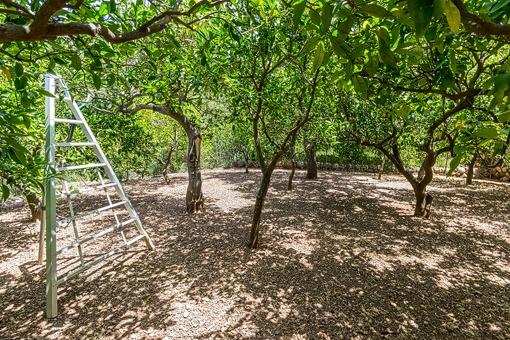 Espacioso jardín con arboles frutales
