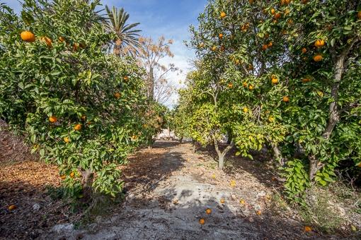Jardín con frutales