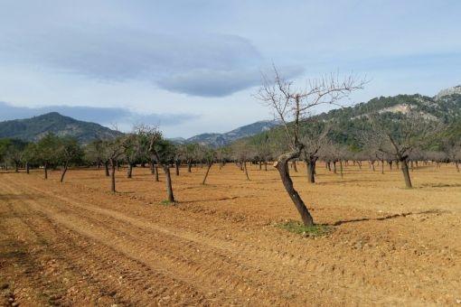 Solar para edificar cerca de Selva, Caimari y Mancor