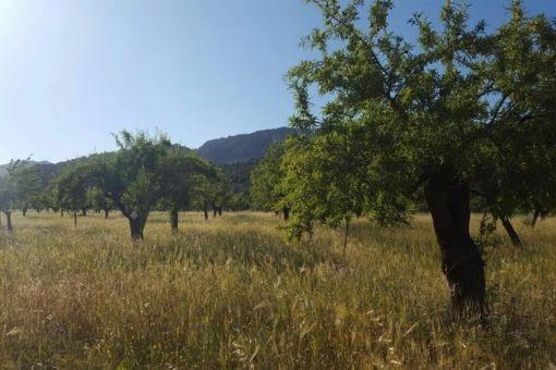 Amplio solar con arboles