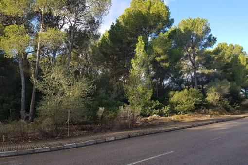 Solar en Santa Ponsa