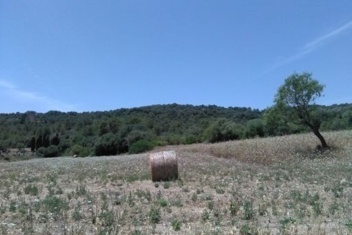 Terreno amplio