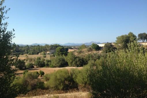 Terreno con posibilidad de obtener licencia en una ladera con vistas despejadas a la bahía de Alcúdia