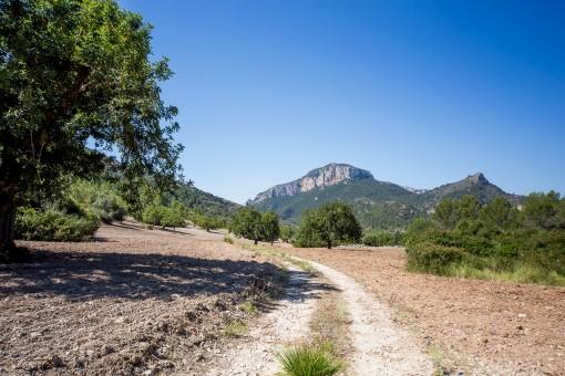 Camino en la propiedad