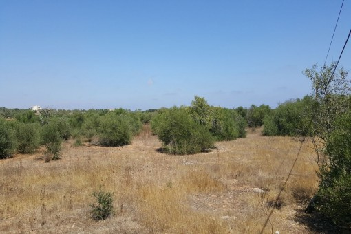 El terreno ofrece vistas lejanas