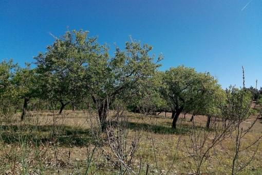 Árboles están situado en el terreno