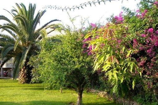 Jardín precioso