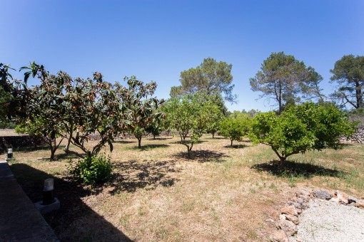 Terreno con varios arboles