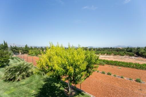 Solar grande con muchas árboles frutales