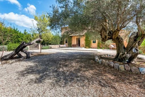 Jardín delantero con olivos