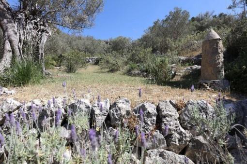 Ubicado en la reserva natural de la Sierra de Tramuntana