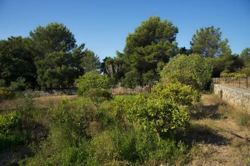 Jardín de la propiedad