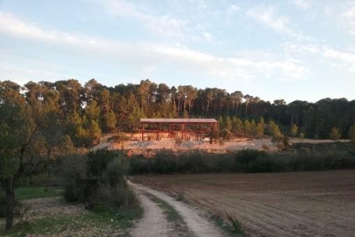 El proyecto está rodeado de la naturaleza verde