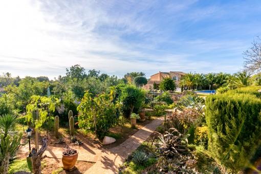 Jardín mediterráneo con muchas plantas