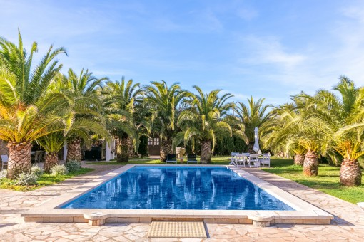 La piscina idílica está rodeada de palmeras