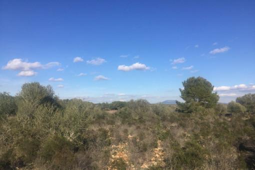 Extensas vistas sobre el campo