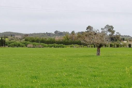 El terreno está situado en un paisaje pintoresco