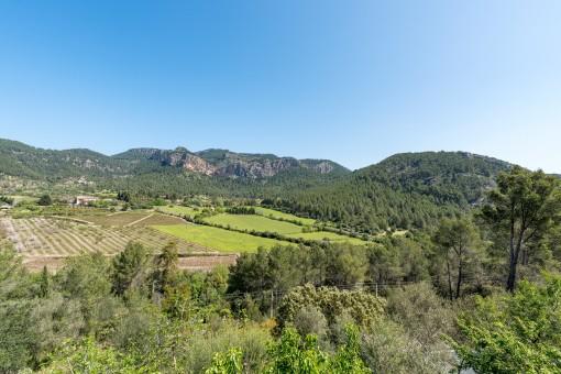 La finca se encuentra frente a una montaña de la Tramuntana