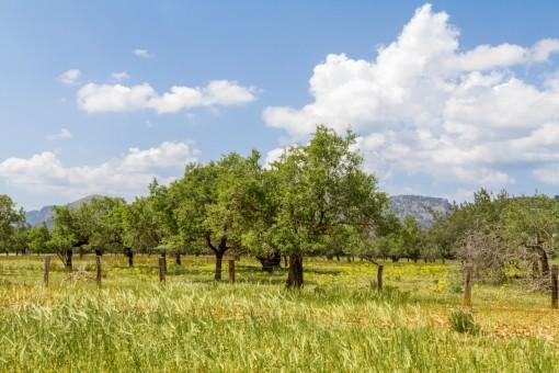 El terreno ofrece un superficie de 242.000,00 metros cuadrados