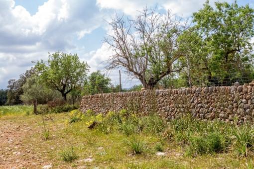 Elementos de un muro de piedra en el terreno