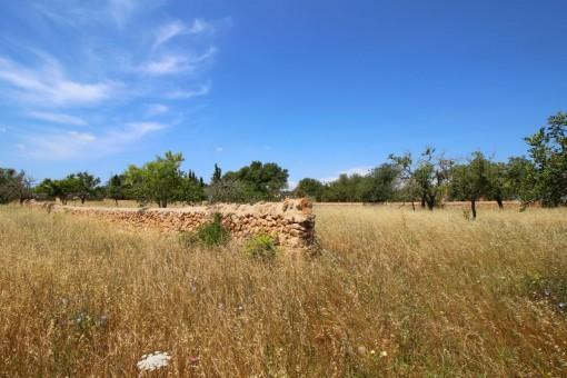 Ambiente mediterráneo