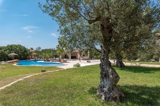 Jardín precioso con olivos