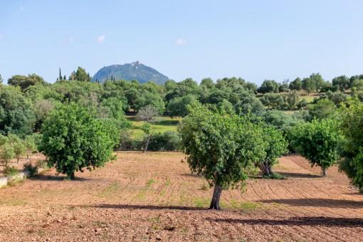Terreno mediterráneo con impresionantes vistas panorámicas