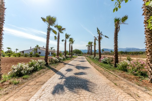 Impresionante acceso con palmeras