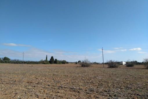 El terreno tiene 114.000 metros cuadrados