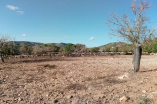 Gran terreno edificable con proyecto básico cerca de San Lorenzo