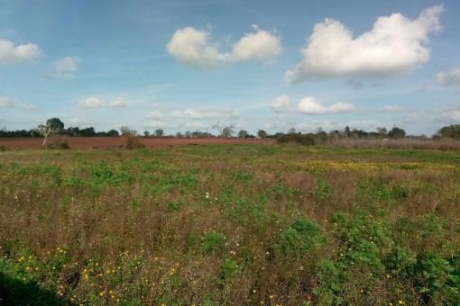 Gran terreno con proyecto básico cerca de San Lorenzo
