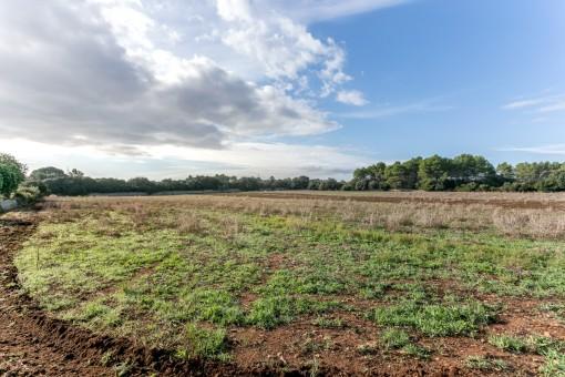 Terreno de 700.000 metrso cuadrados en Sencelles con construcciones a reformar, zonas de cultivo y arboladas