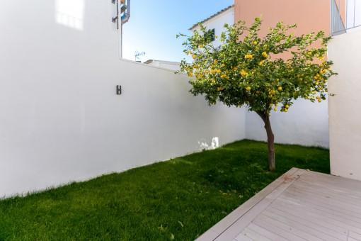 Jardín provado con limonero