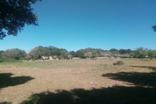 Vistas del terreno