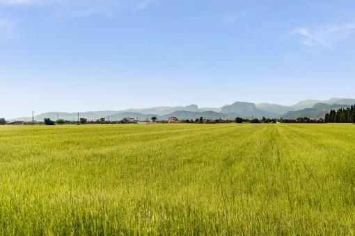 Idílicas vistas al paisaje