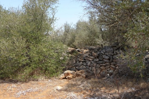 Muros de piedra natural