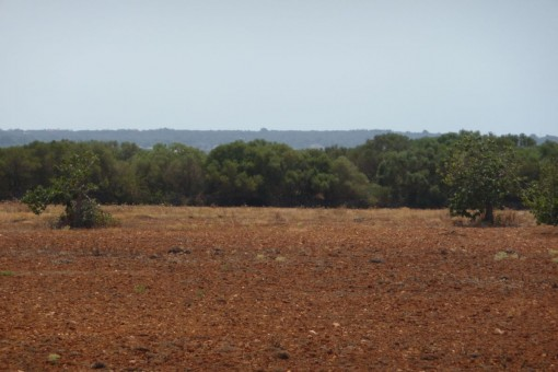Vista alternativa del terreno