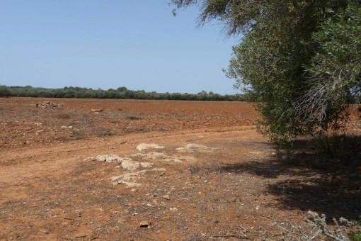 Terreno extenso