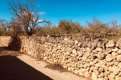 El terreno está completamente cerrado por un muro