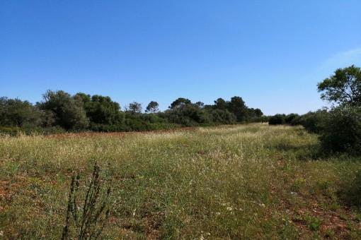 Gran terreno edificable en zona tranquila cerca de Pina