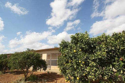 Jardín con árboles frutales